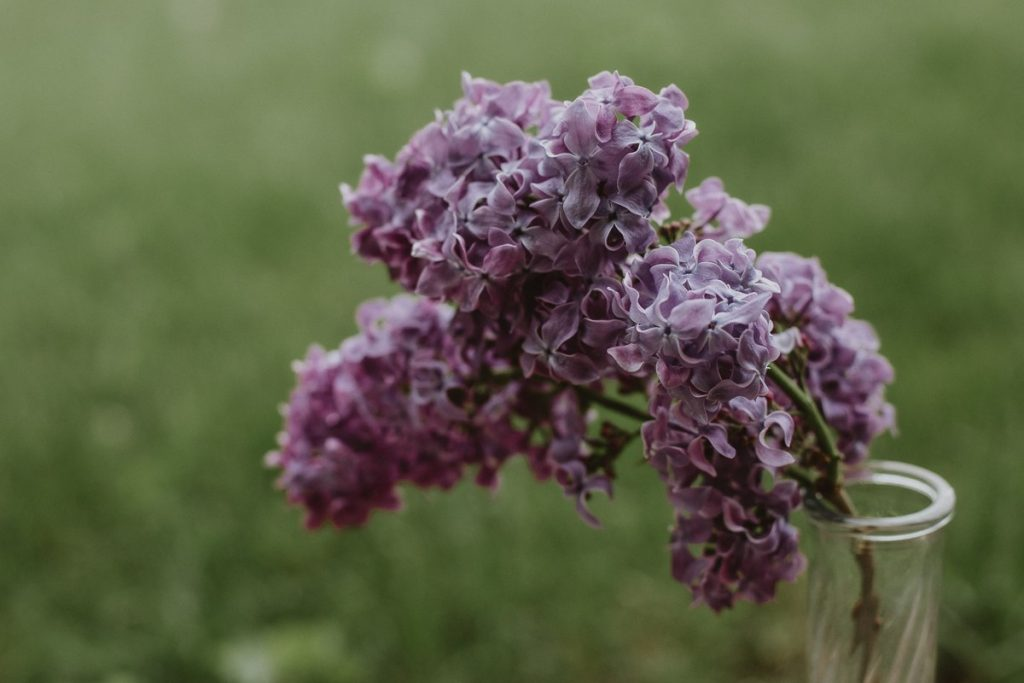 A filmic photo of a bouquet of purple lilacs in a vase.
